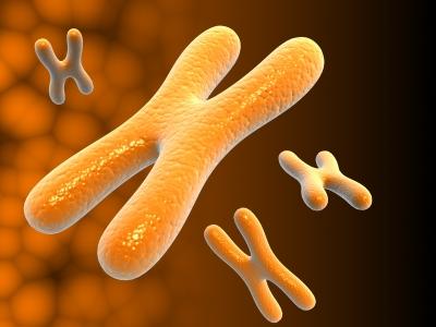 Chromozomy (ilustrační foto)