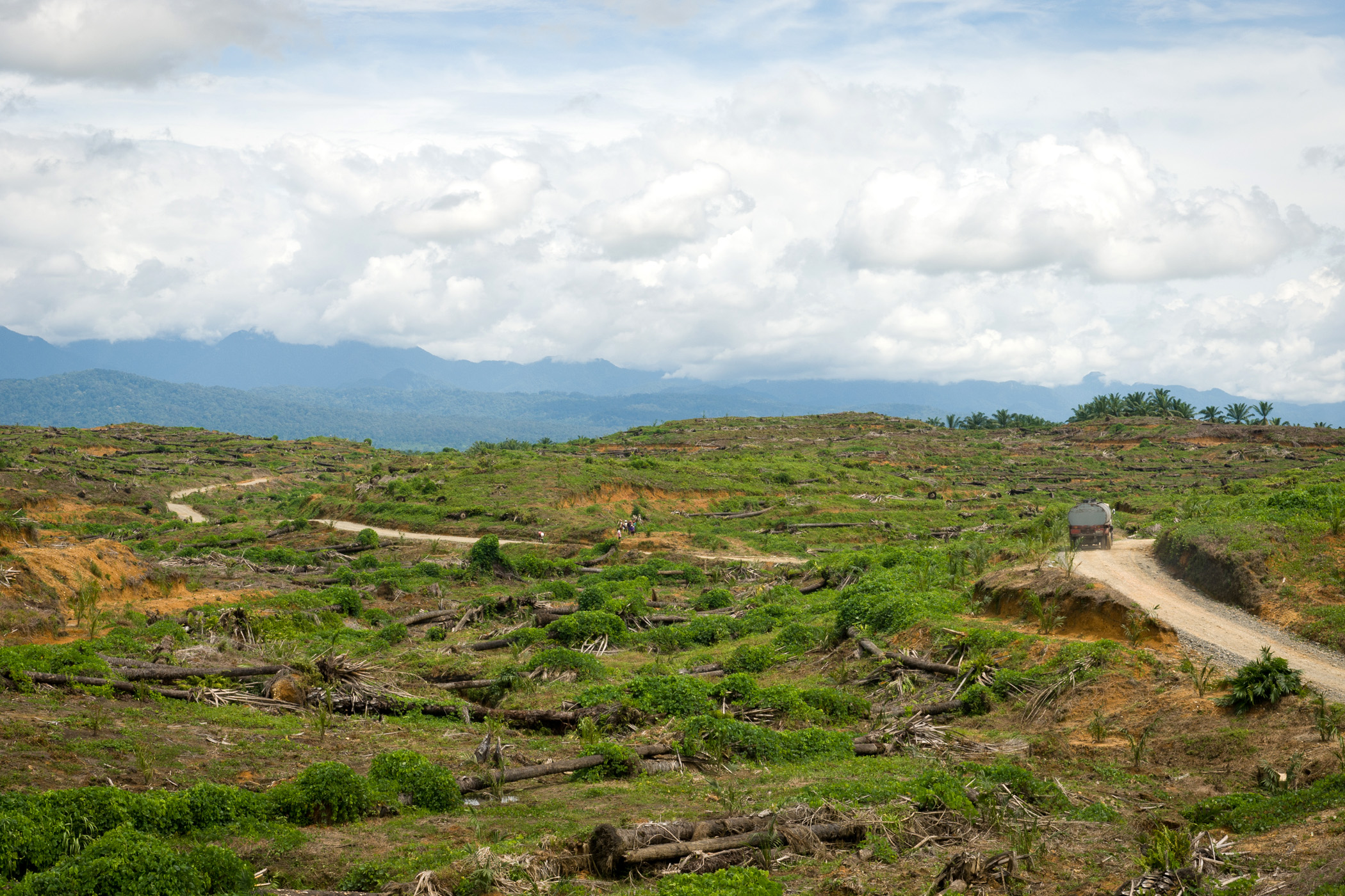 vykácené pralesy, palmový olej