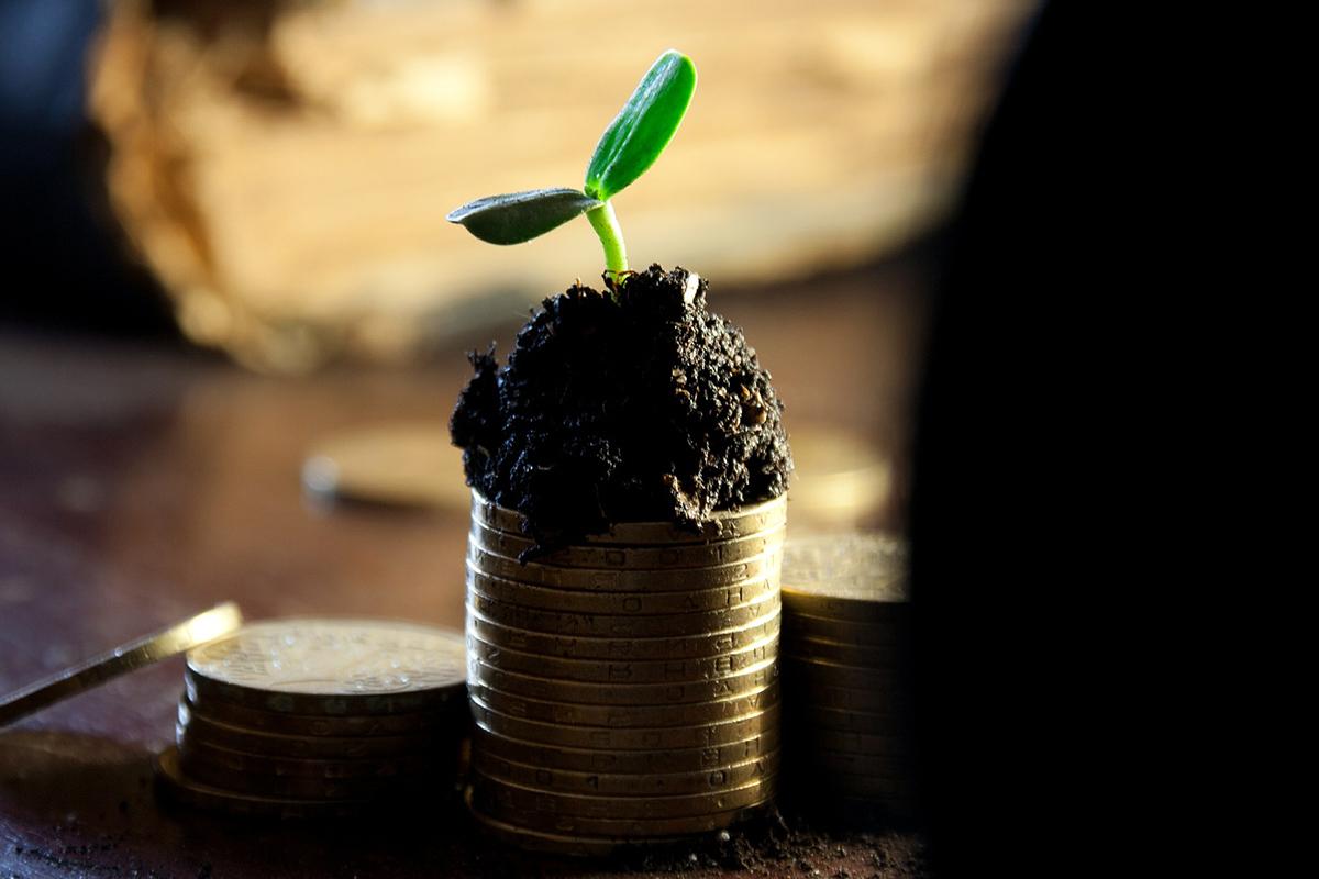 peníze, mince, růst