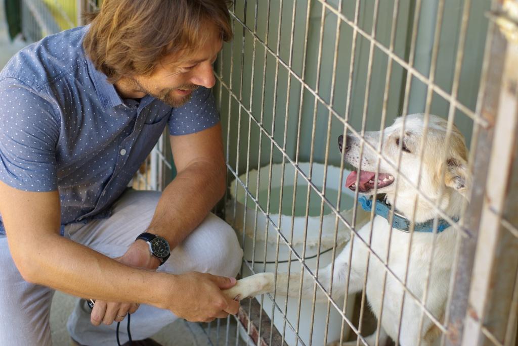 Psi, kteří našli domov v útulku, mají naději na lepší život