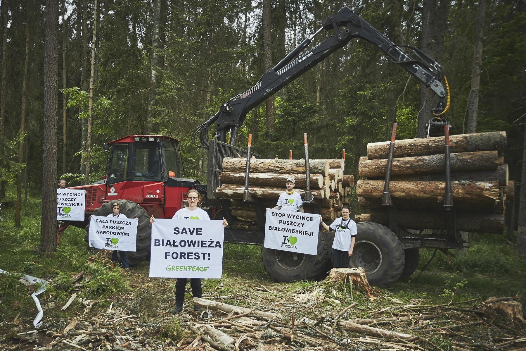 V polském Bělověžském lese se kácí kvůli kůrovci