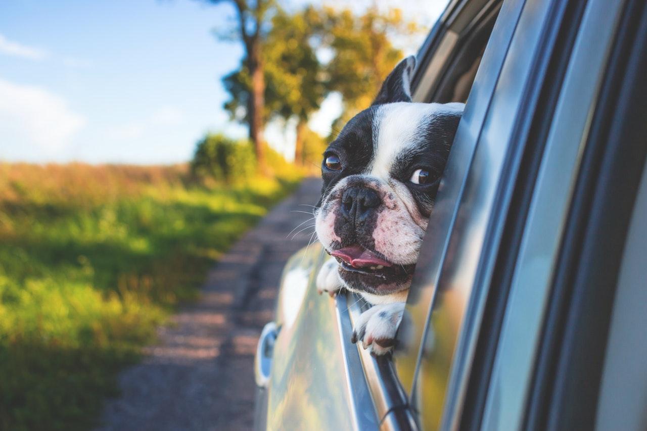Pes v autě - auto - řízení