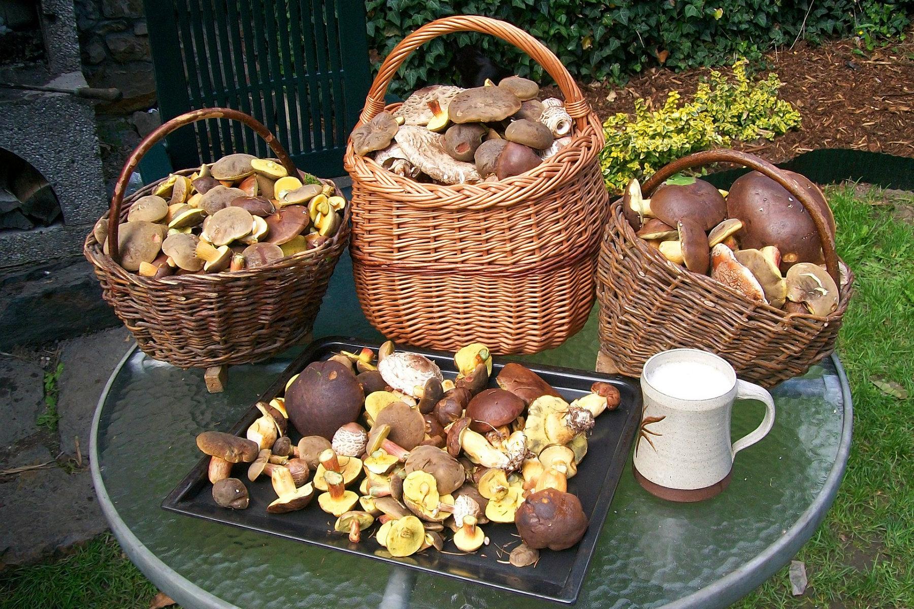 Košíky plné hub