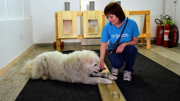 Psi v Kopřivnici hledají rakovinu