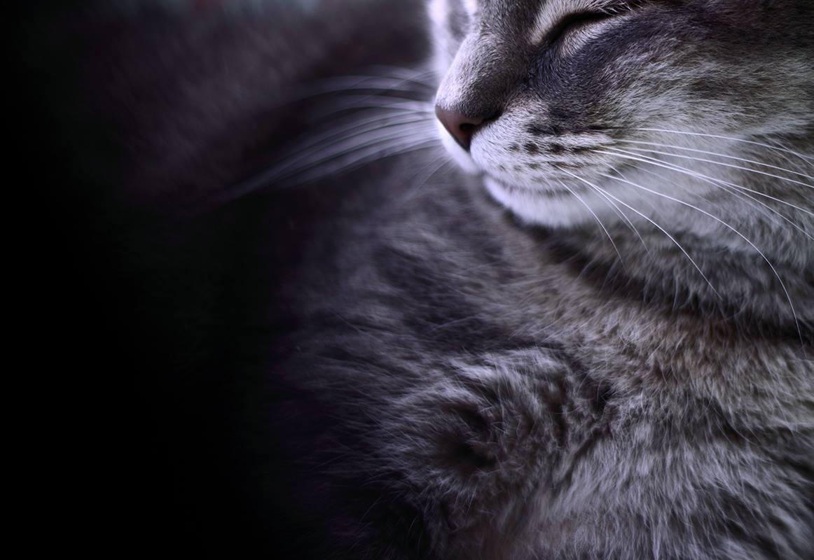 Kočka, kocour, srst