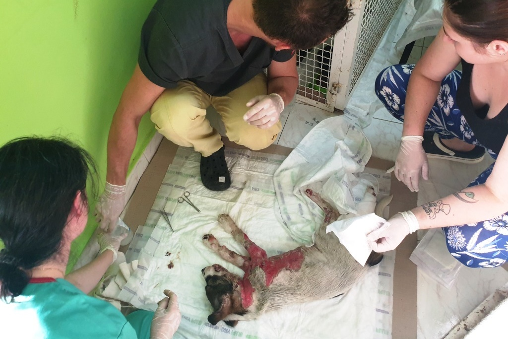 Báře při ošetřování štňátka asistují praktikanti Juraj a Kája