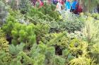 Zahrada Čech - sazenice jehličnanů