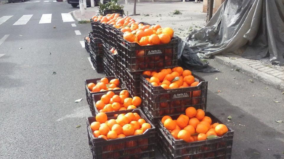 V každé z beden je nejméně 18 kilogramů pomerančů. Majitel firmy Manuel je prodává na marmeládu