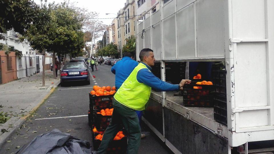 Každý pracovník musí nasbírat denně alespoň 60 nebo 70 přepravek