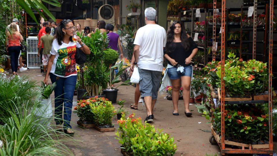V tržnici jsou mimo jiné velká květinářství. Čerstvé řezané květiny jsou ale k vidění hlavně brzy ráno