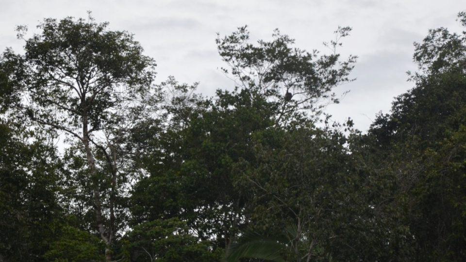 Kdo najde ve větvích zavěšeného lenochoda?