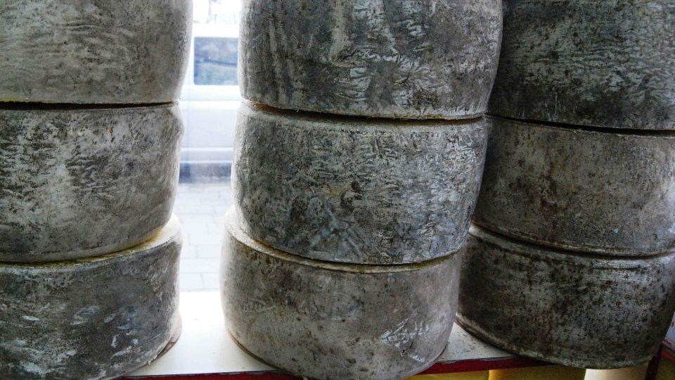 Dva roky starý sýr kašar zraje ve velkých kolech připomínajících pneumatiky