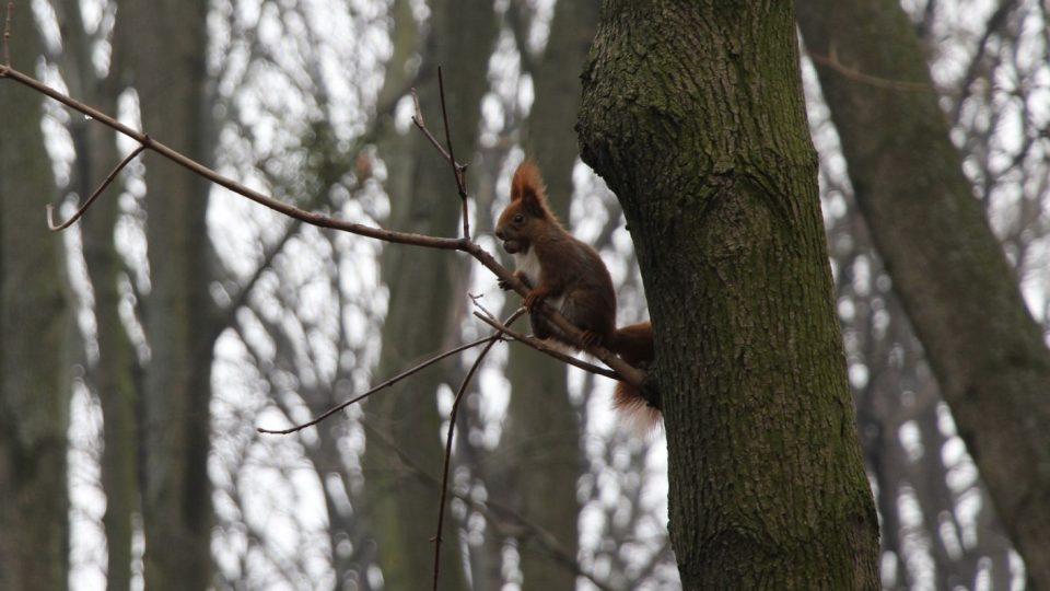 V korunách stromů narazíte spíš na veverku než na vrabce
