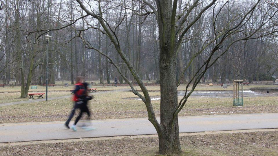 Vrabci zmizeli i z varšavských parků. Kdo ale hledá, najde je ukryté ve křoví