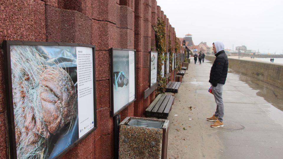 Záchranná stanice usiluje i o větší osvětu mezi lidmi, jak se mají chovat, když najdou na pláži opuštěného tuleně