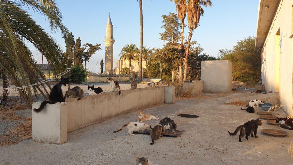V mešitě na břehu solného jezera žije na sto koček. Stará se o ně paní Stavroula