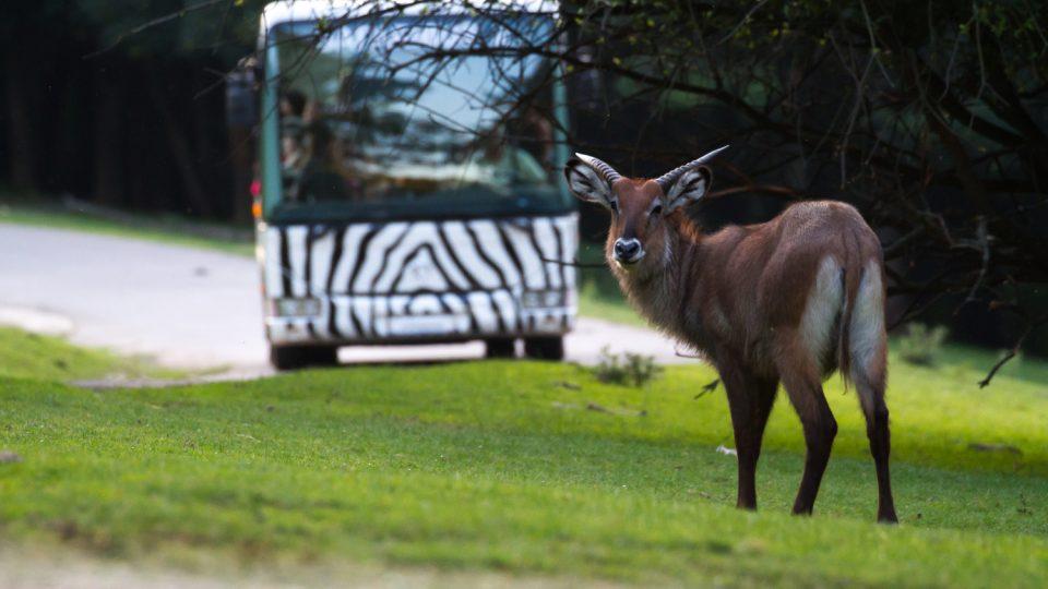 Za tmy je možné navštívit safari vautobusech nebo v safari trucku zoologické zahrady