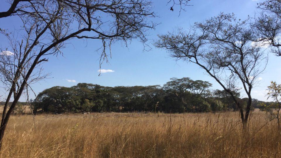 Přírodní park Chivero v Zimbabwe teprve čeká, až ho turisté objeví.