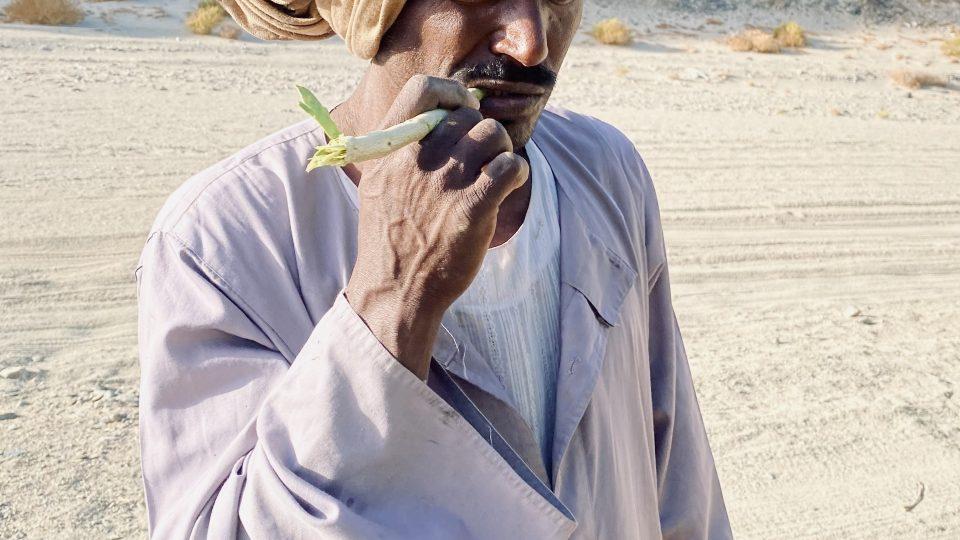 Ve Wádí Džimá rostou keře arák, z jehož větviček si Beduíni dělají zubní kartáčky