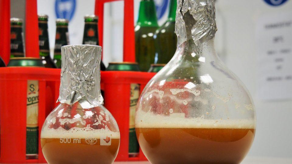 Kvasničný kmen dodává pivu jeho charakteristickou chuť