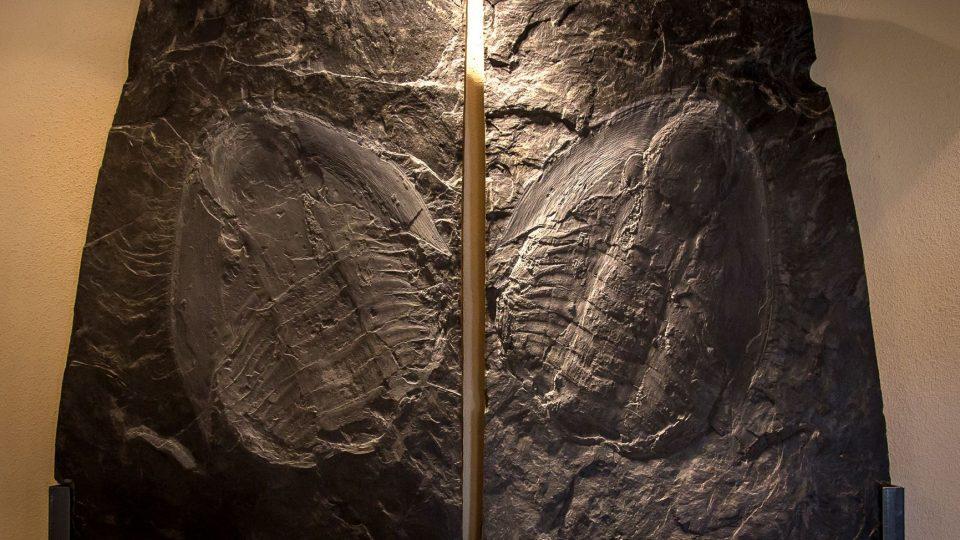 Největší zkamenělina trilobita na světě dosahuje téměř devadesáti centimetrů