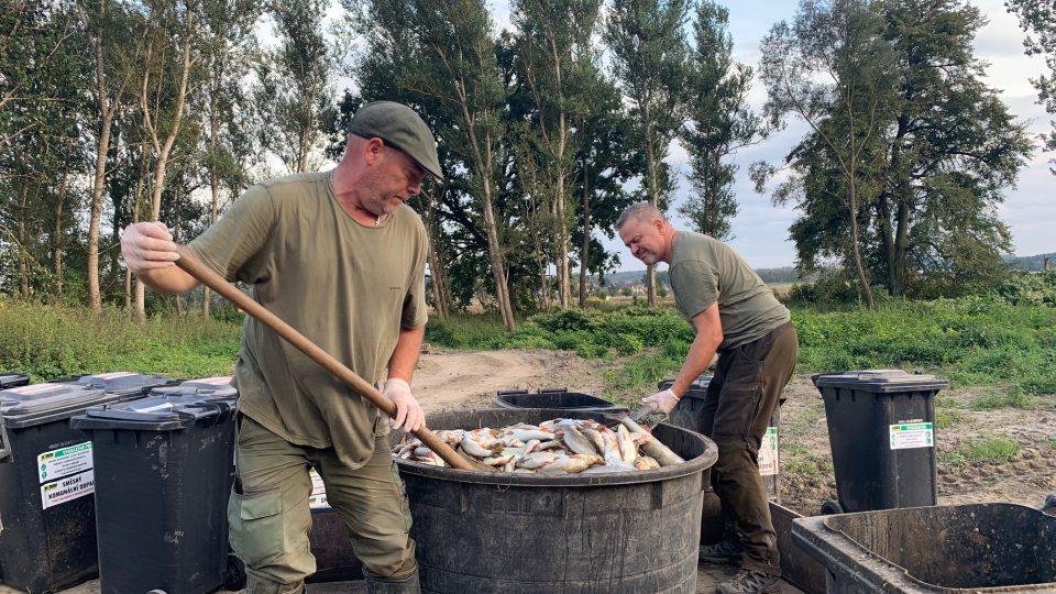 Odklízení uhynulých ryb z Bečvy