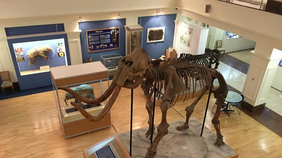 Tato kostra je pozoruhodná tím, že všechny kosti patří jednomu zvířeti