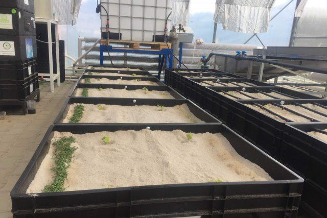 Organický způsob zavlažování počítá s umístěním hadic pod povrch, aby se snížilo odpařování