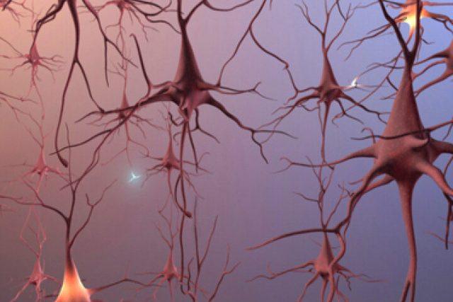 Mozkové neurony