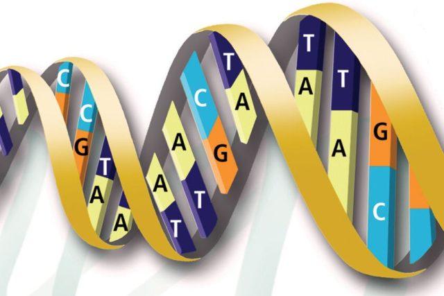 """Existují """"geny pro chytrost""""?"""