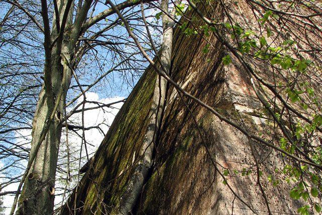 Lesem zarůstající ruiny 80 staveb