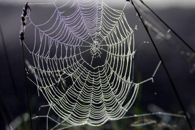 Pavučina (snímek uživatele Stebra)