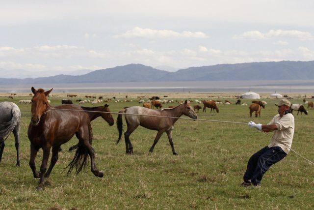 Mongolští pastevci ovládají bezchybně i práci s lasem