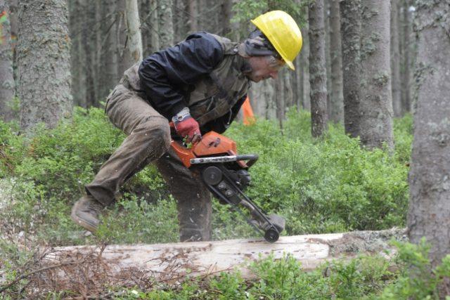 Dřevorubci v šumavské lokalitě Na Ztraceném u Modravy. Kůrovec, kácení
