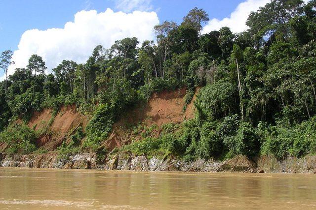 Prales na březích Amazonky