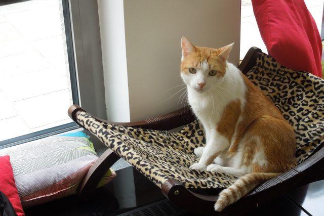 V kavárně zatím našli domov tři kocouři a jedna kočička Ayla