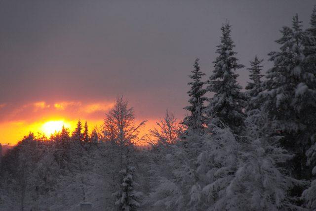 Stojíme na kraji lesa, okolo nás se rozkládá bílé království
