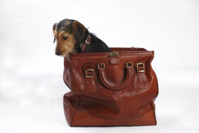 Pes v tašce. Ilustrační foto
