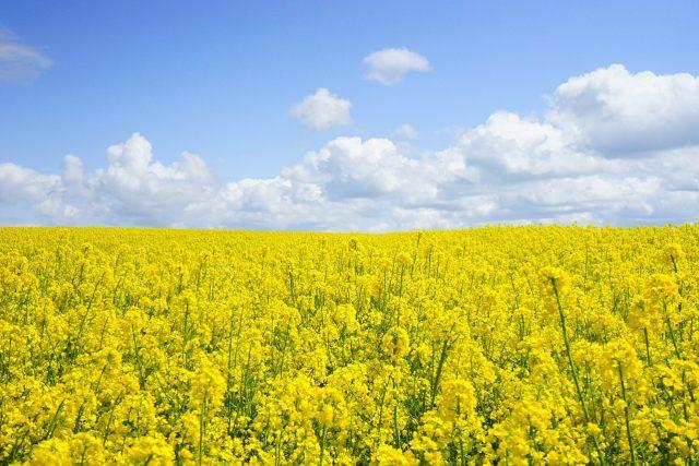 Je budoucnost v biopalivech? Podle ekologů ne   foto: Fotobanka Pixabay