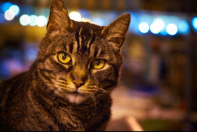 Kočka - kocour