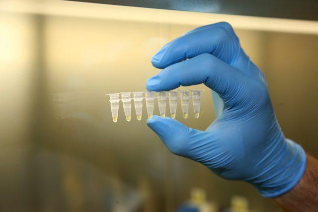 Vzorky DNA připravené k analýze   foto:  Policie Jihočeského kraje