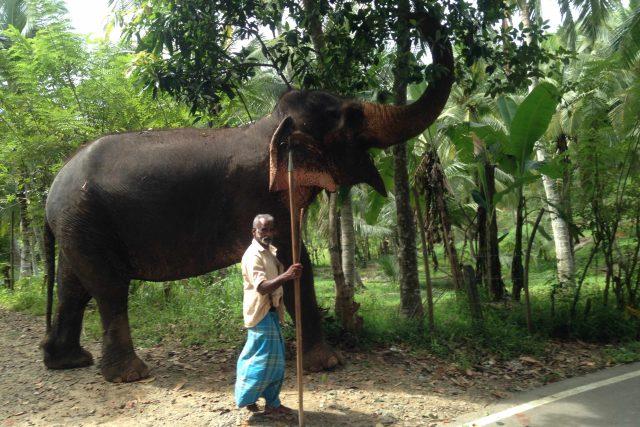 Mahúti jsou povinni se o slony starat s láskou a bez použití násilí