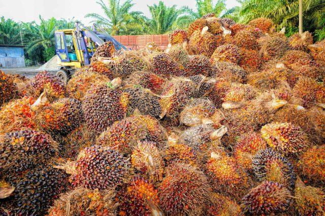 Lisováním plodů palmy olejné se získává palmový olej. Kromě toho, že kvůli jejímu intenzivnímu pěstování mizí rozsáhlé plochy deštných pralesů, vzniká při výrobě oleje i velké množství nepotřebného bioodpadu