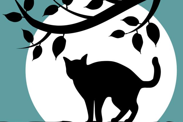 Černá kočka