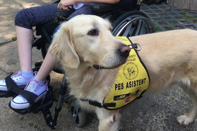 Asistenční pes Charlie