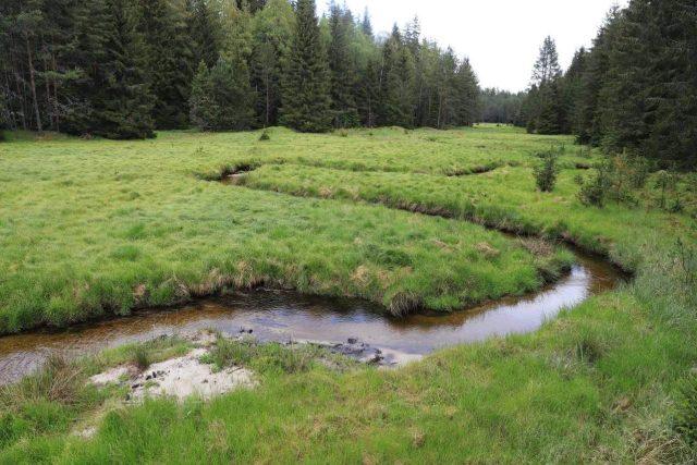 Potok Hučina na Šumavě byl v roce 2013 z hlubokého narovnaného kanálu přesunut do původního koryta