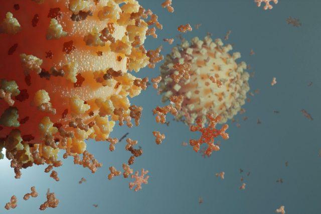 Model koronaviru