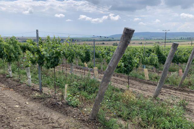 Vinohrad v Šatově