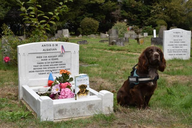 Antis II drží čestnou stráž u hrobu vyznamenaného psího hrdiny