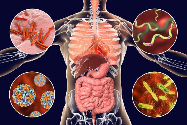Jak podpořit střevní mikroorganismy? Zahrňte do jídelníčku petrželku,  kopr,  špenát a bazalku   foto: Fotobanka Profimedia